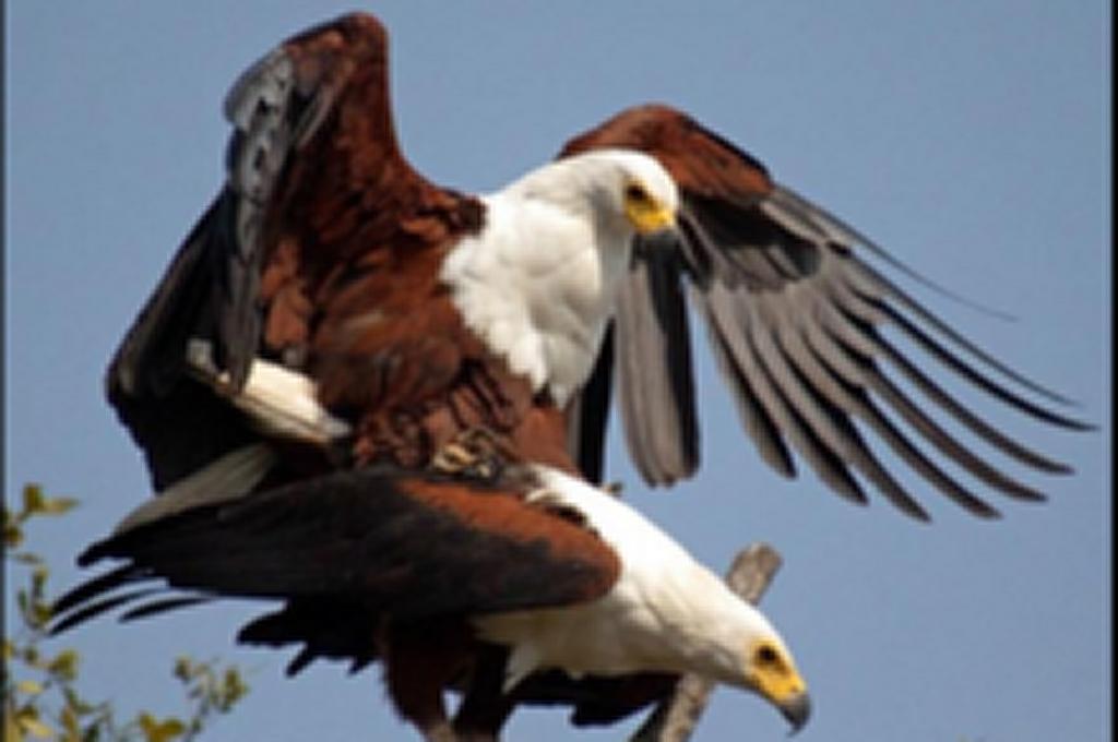 Bird Watching in Kenya