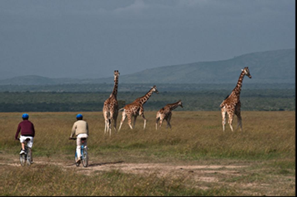 Fun Holidays in Kenya