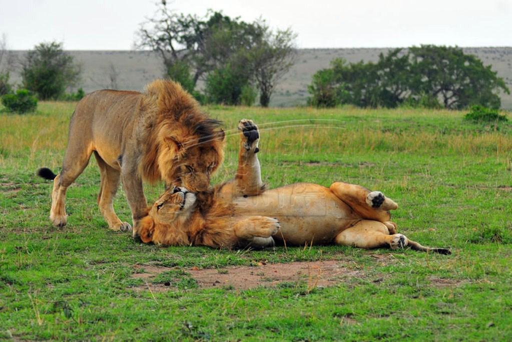 Kenya's Big Five Animals