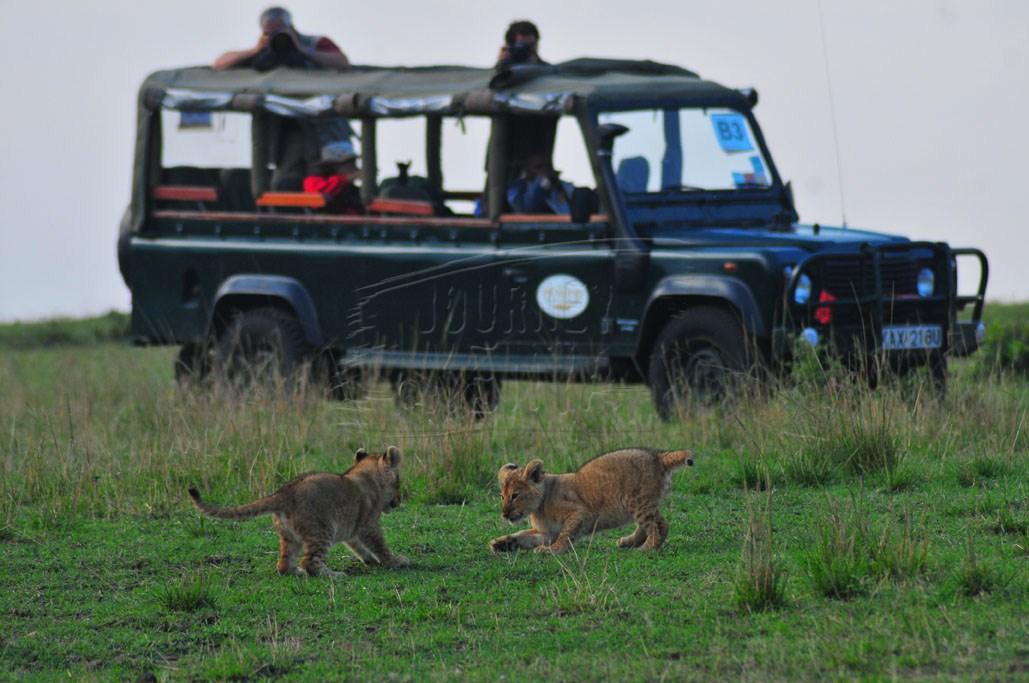 Maasai Mara Game Drive