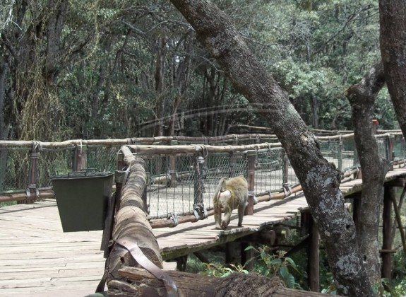Nairobi Safari Walk