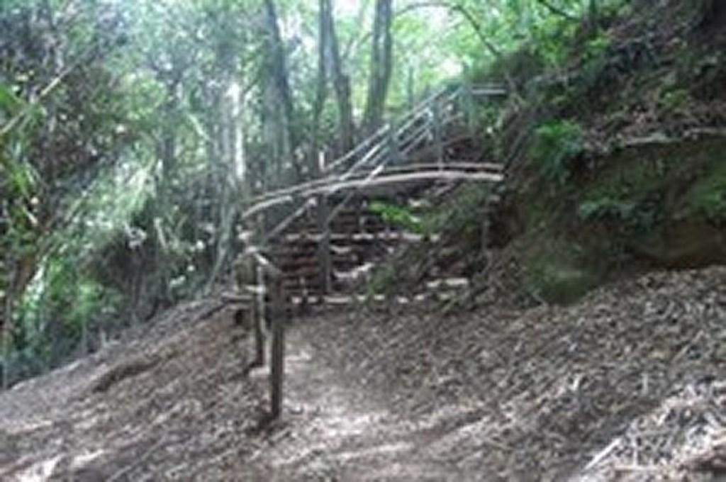 Karura Forest, off Limuru Road