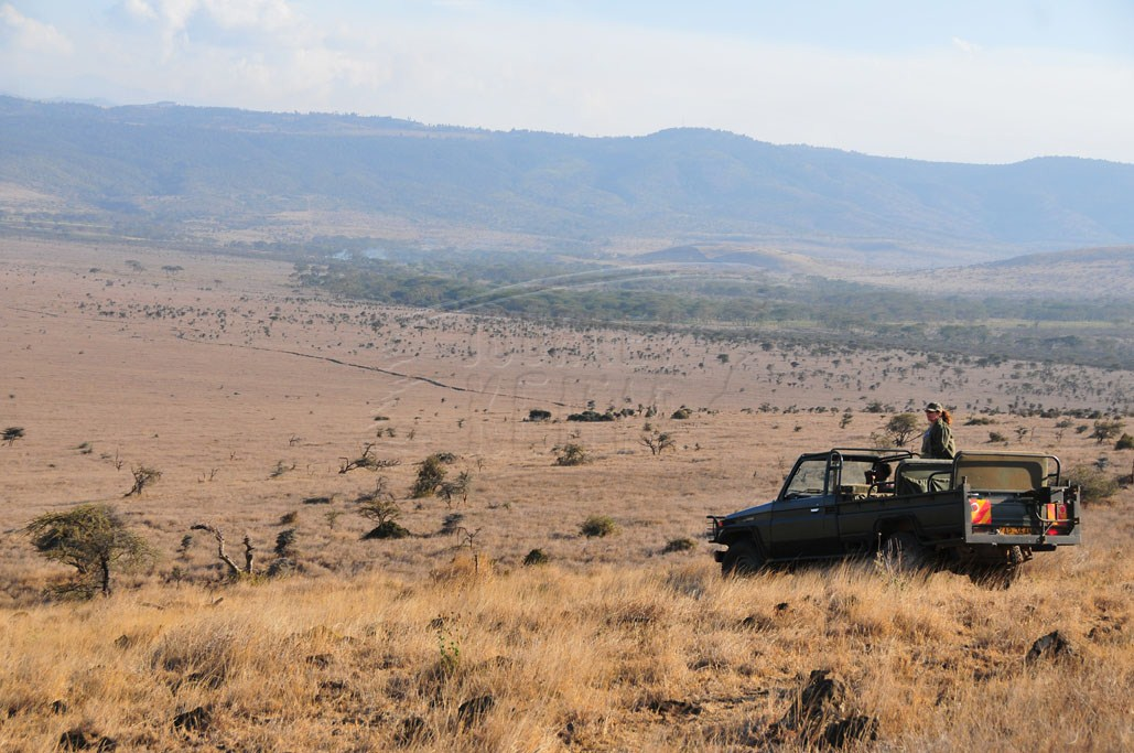 Lewa Conservancy in Isiolo
