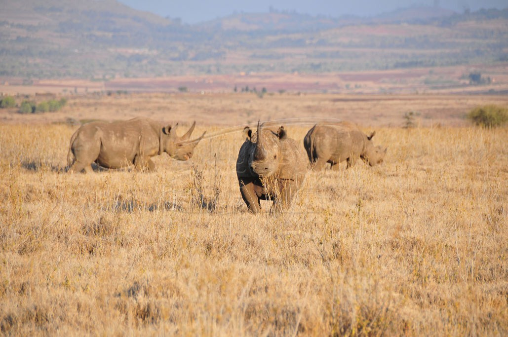 The rolling plains of Lewa Wildlife Conservancy