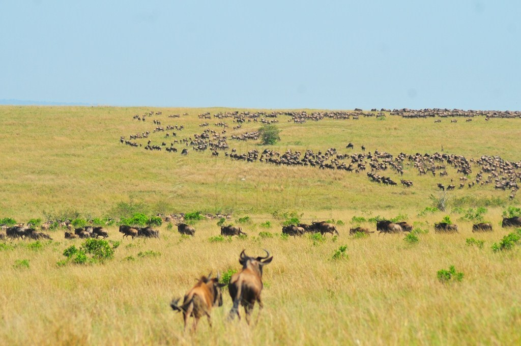 The great annual migration from July to October