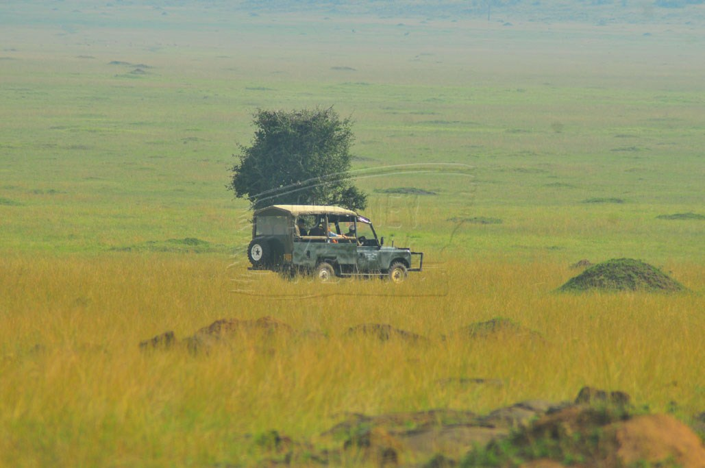 Tourists exploring the plains of Maasai Mara