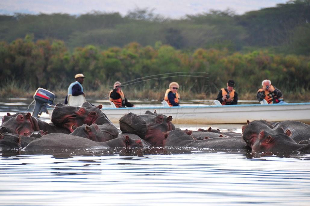 A thrilling boat ride on Lake Naivasha