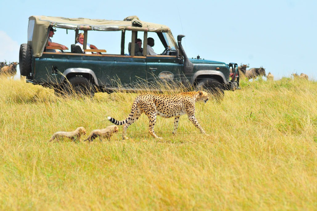 Visitors exploring the plains of Maasai Mara