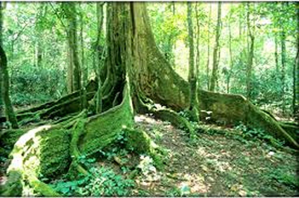 Kakamega Forest, Kakamega Town