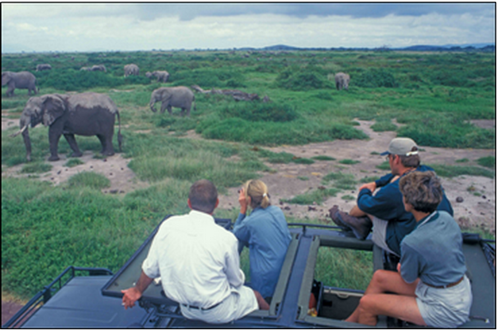 Wildlife Safari in Kenya