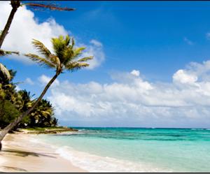 Beach Safari in Coast