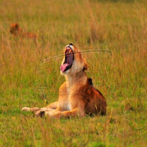 Governors Camp, Maasai Mara
