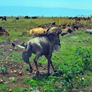 Wildlife Across East Africa