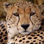 Best Safari Holiday in Kenya