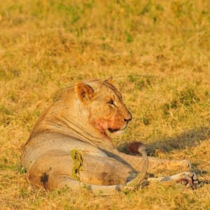 Maasai Mara Reserves