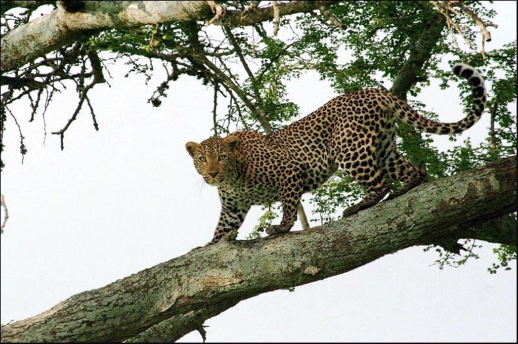 Lake Nakuru National Park