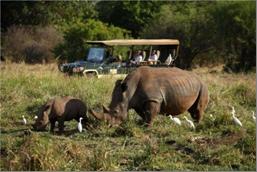 A rhino with a cub in Lewa Wildlife Conservancy