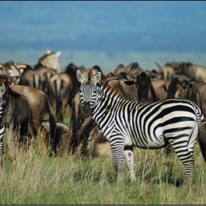7 day excursion of Kenya