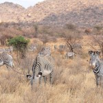 Wildlife at Ol Pejeta