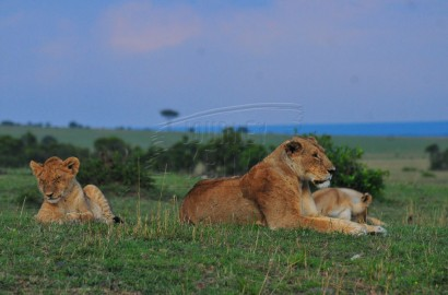 Mara National Reserve