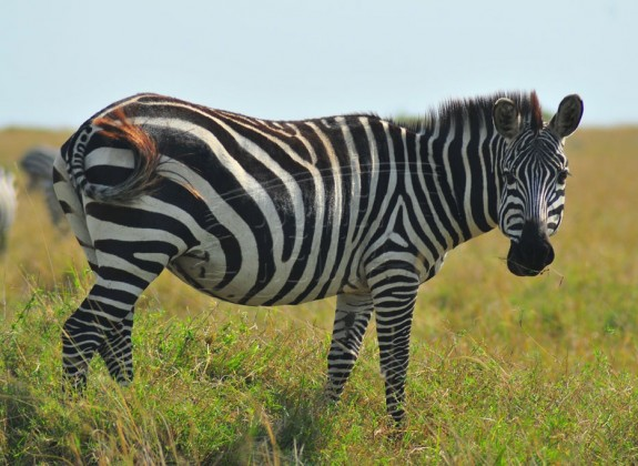 Wildlife to see at Kigio Wildlife Conservancy