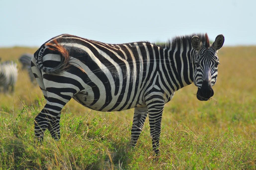 Wildlife to see at Kigio Wildlife Conservancy