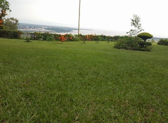 A lush garden overlooking the city.